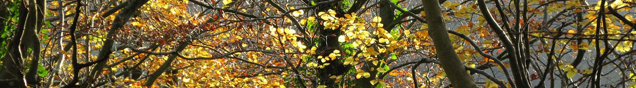 wintertrees02