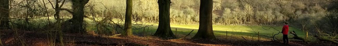 woods01
