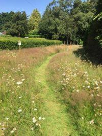 Orchard Mowed Path